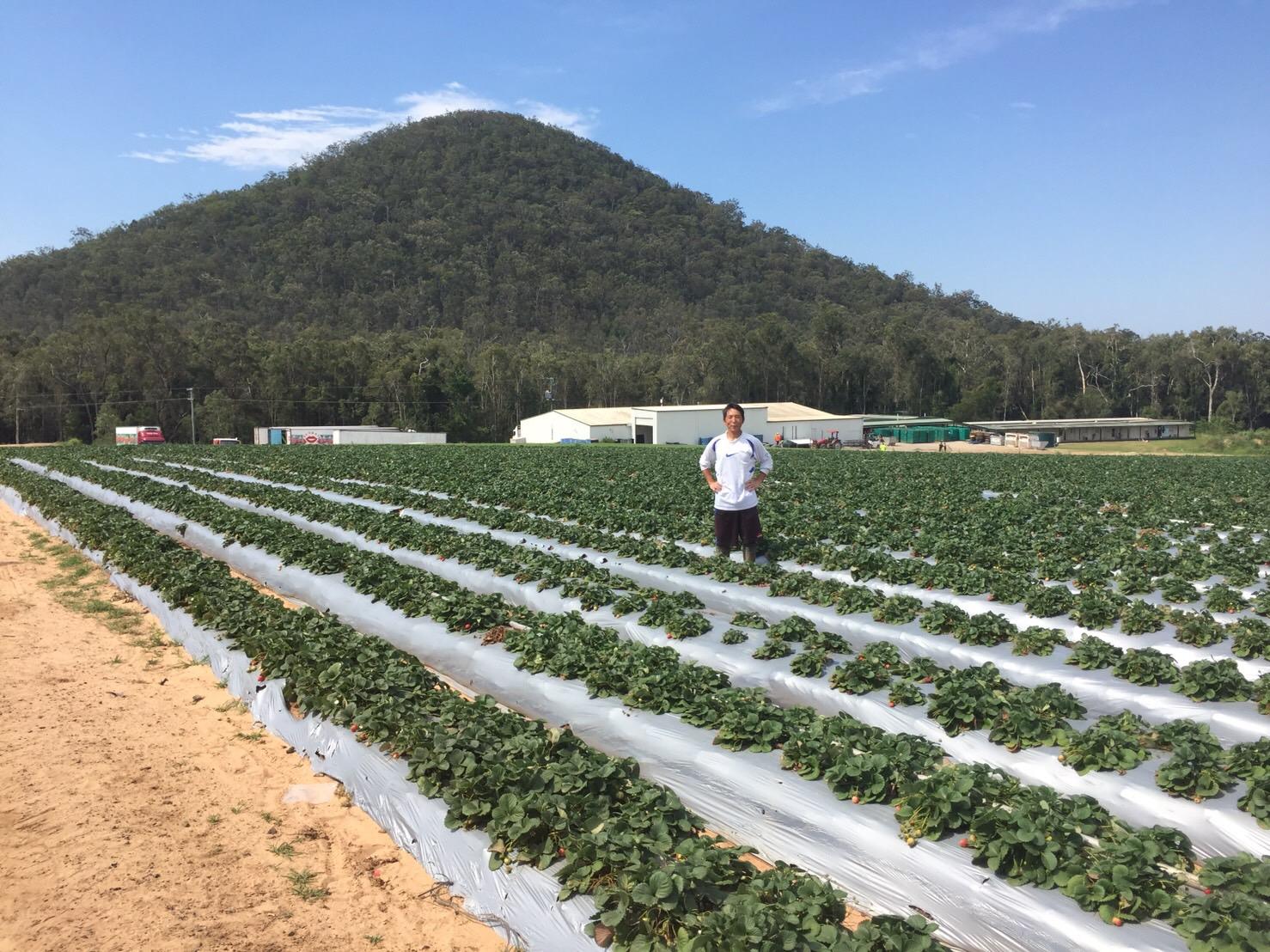 オーストラリアで農業をしたお話。